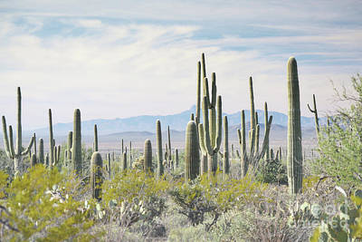 Photograph - Arizona Desert Mountain Landscape by Andrea Hazel Ihlefeld