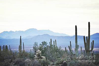 Photograph - Arizona Desert Mountain Sunset by Andrea Hazel Ihlefeld