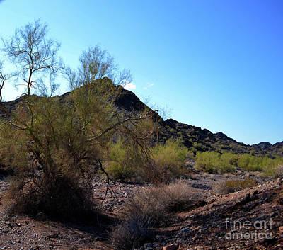 Photograph - Arizona Desert by Renie Rutten