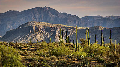 Photograph - Arizona Desert  by Saija Lehtonen