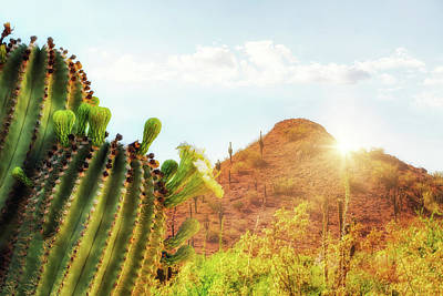 Photograph - Arizona Desert Scene With Mountain And Cactus by Susan Schmitz