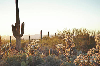 Photograph - Arizona Dreamy Sunset Countryside by Andrea Hazel Ihlefeld