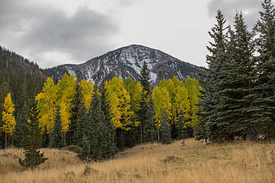 Flagstaff Wall Art - Photograph - Arizona Fall by Bill Cantey