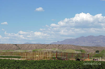 Photograph - Arizona Farming by Methune Hively