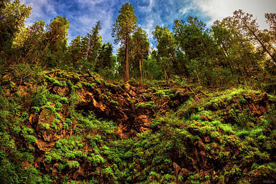 Photograph - Arizona Ferngully by Rick Furmanek