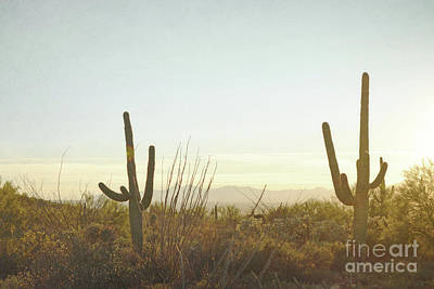 Photograph - Arizona Golden Cactus Desert by Andrea Hazel Ihlefeld