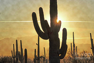 Photograph - Arizona Golden Cactus Sunset Landscape by Andrea Hazel Ihlefeld
