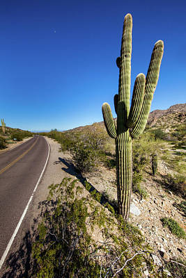 Photograph - Arizona Highway by Ed Cilley