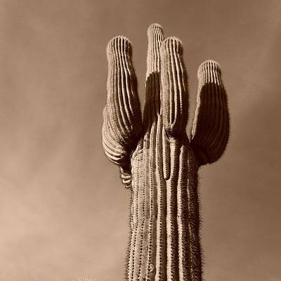 Photograph - Arizona Icon by Bill Tomsa