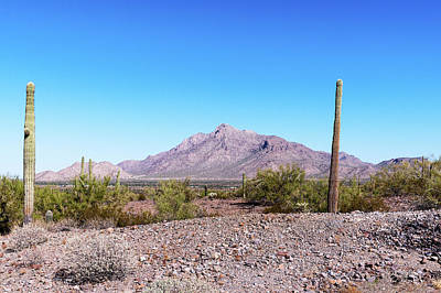 Photograph - Arizona Landscape by Edward Peterson
