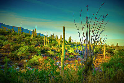 Photograph - Arizona Landscape Series L9250069 by Sandra Selle Rodriguez