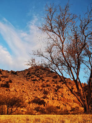 Photograph - Arizona Morning Golden Hour by Glenn McCarthy Art and Photography