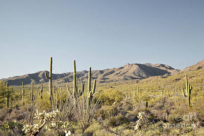 Photograph - Arizona Mountain Field Landscape by Andrea Hazel Ihlefeld