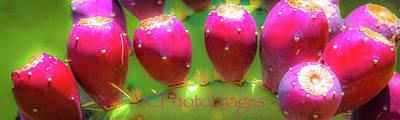 Photograph - Arizona Pink by Veronika Countryman