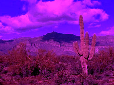 Photograph - Arizona Purple Haze by Judy Kennedy
