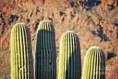 Photograph - Arizona Red Rock Cactus Mountain Landscape by Andrea Hazel Ihlefeld