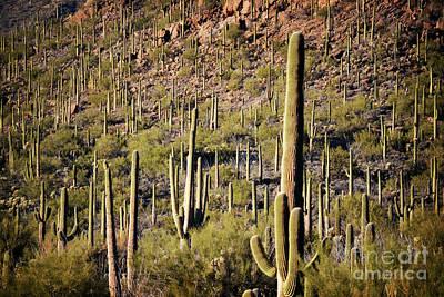 Photograph - Arizona Rustic Desert Cactus Landscape by Andrea Hazel Ihlefeld