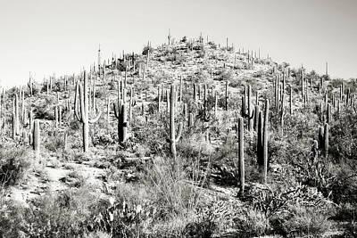 Photograph - Arizona Saguaro Cactus Mountain Hill Landscape by Andrea Hazel Ihlefeld