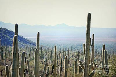 Photograph - Arizona Saguaro Cactus Rustic Sunset Landscape by Andrea Hazel Ihlefeld