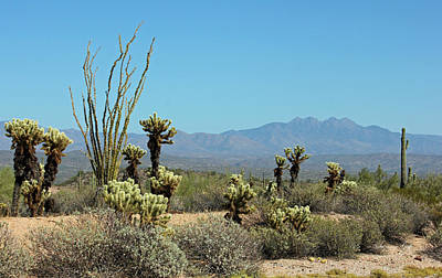 Photograph - Arizona Scenic IIi by Suzanne Gaff