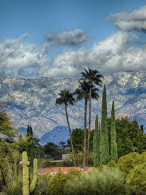 Photograph - Arizona Snow by Charlie Alolkoy