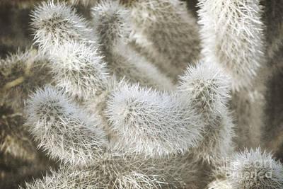 Photograph - Arizona Soft Desert Cactus Branches Landscape by Andrea Hazel Ihlefeld