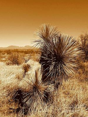 Photograph - Arizona Southwest Landscape by Michael Hoard