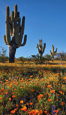 Photograph - Arizona Spring Flowers And Blossoms With Saguaro Cactus by Dave Dilli