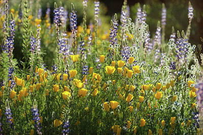 Photograph - Arizona Spring Wildflowers  by Saija Lehtonen