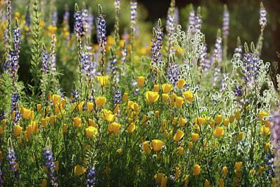 Print featuring the photograph Arizona Spring Wildflowers  by Saija Lehtonen