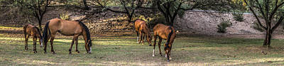 Horse Photograph - Arizona Wild Horse Panoramic by Chuck Brown