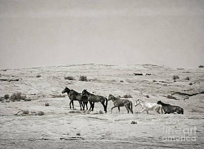 Photograph - Arizona Wild Horses Mountain by Andrea Hazel Ihlefeld