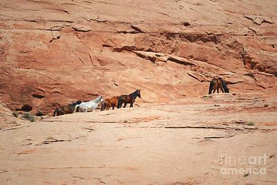 Photograph - Arizona Wild Horses Rustic Mountain Landscape by Andrea Hazel Ihlefeld