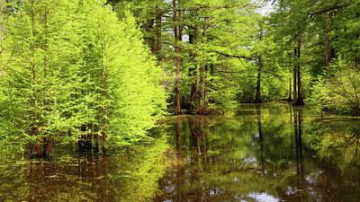 Photograph - Arkansas Bottomlands by Nicholas Blackwell