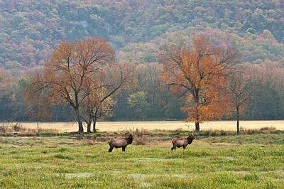 Arkansas Elk - 7802 Art Print by Jerry Owens