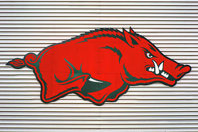 Sports Royalty-Free and Rights-Managed Images - Arkansas Razorback on Metal by Gregory Ballos