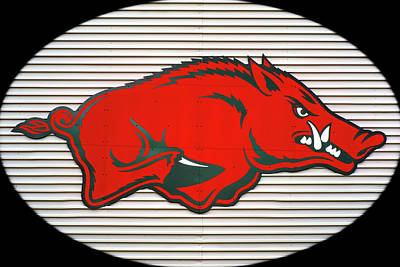 Sports Royalty-Free and Rights-Managed Images - Arkansas Razorback on Metal with Black Border by Gregory Ballos