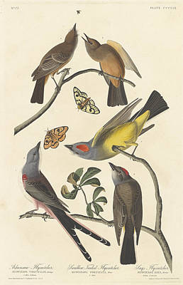 Flycatcher Painting - Arkansaw Flycatcher, Swallow-tailed Flycatcher And Says Flycatcher by John James Audubon