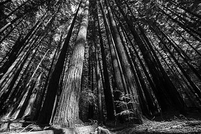 Photograph - Armstrong National Park Redwoods Filtered Sun Black And White by Toby McGuire