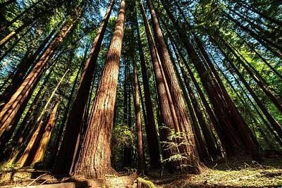 Photograph - Armstrong National Park Redwoods Filtered Sun by Toby McGuire