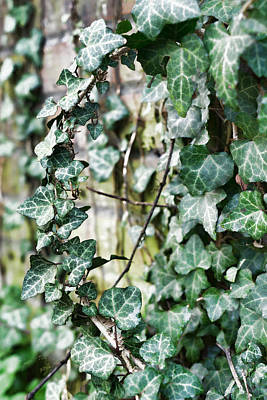 Photograph - Around The Vine by Sharon Popek