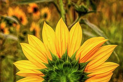 Digital Art - Array Of Sunshine by Becky Titus