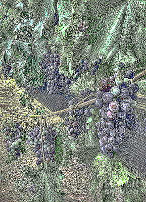 Photograph - Arrington Grapes by Luther Fine Art