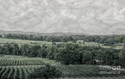 Photograph - Arrington Vineyard Landscape by Luther Fine Art