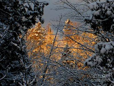 Photograph - Arrival by Elfriede Fulda