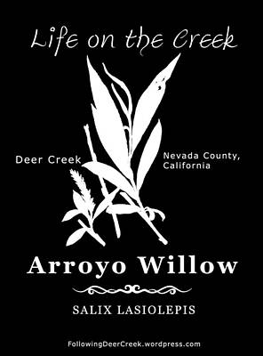 Digital Art - Arroyo Willow - White Text by Lisa Redfern