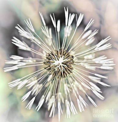 Photograph - Art In Nature - Dandelion Explosion by Kerri Farley