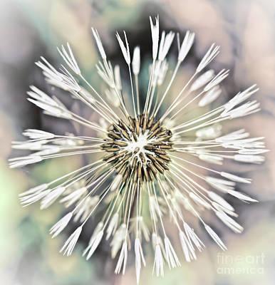 Photograph - Art In Nature - Dandelion Explosion by Kerri Farley