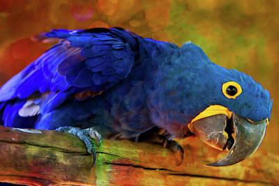 Digital Art - Art Loving Blue Macaw by Georgiana Romanovna