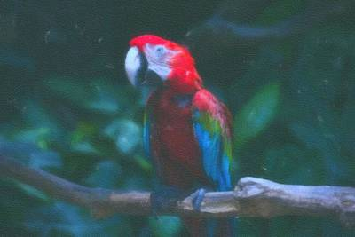 Macaw Art Painting - art Macaw 1 by Celestial Images